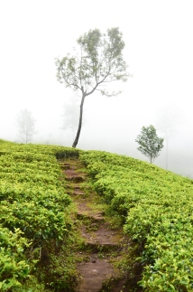 Sri Lanka-8737